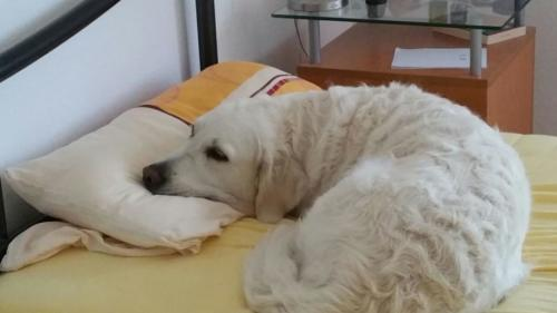 Akira im Bett