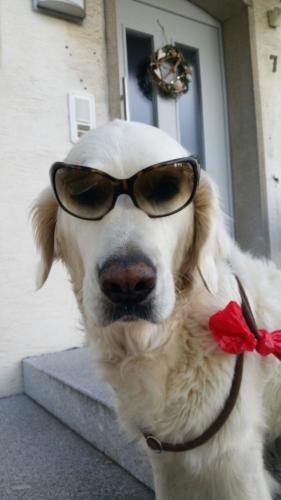 Akira mit Brille