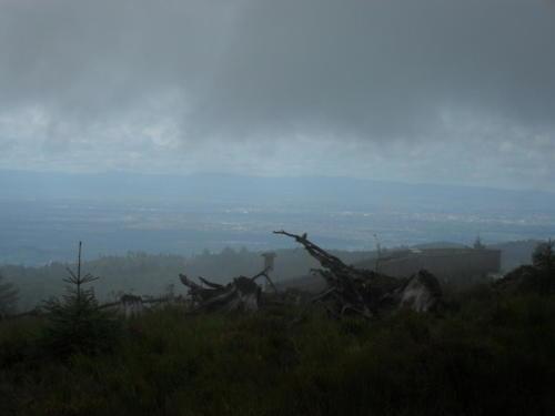 Regen im Schwarzwald